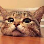 3 Manfaat Steril Kucing yang Perlu Anda Ketahui